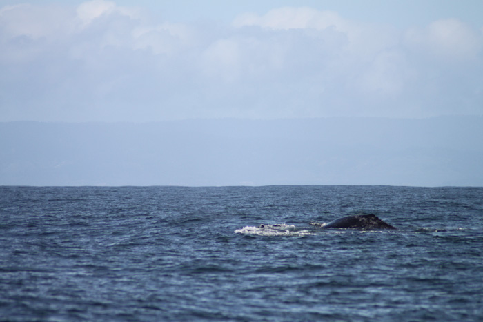 Whale Watching, San Francisco, California