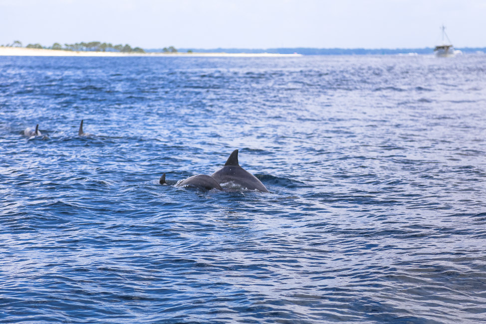 PCB Vacation: A Dolphin Tour to Shell Island