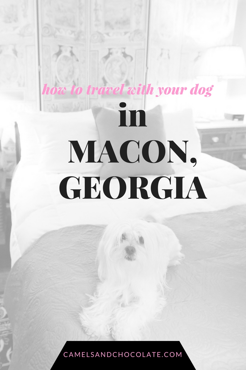 Pet-Friendly Travel in Georgia: Where to Take Your Dog in Macon