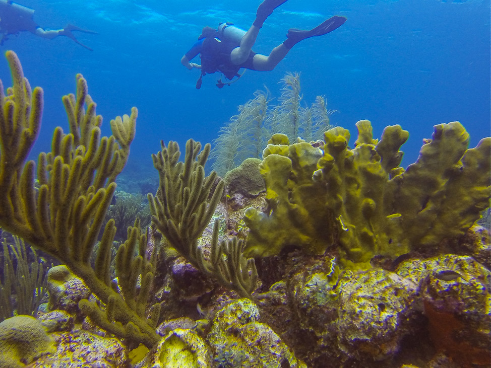Diving in Curacao with Ocean Encounters