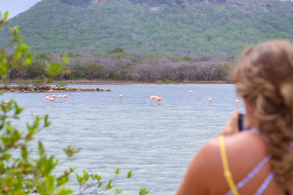Flamingos + Beaches: The West Coast of Curacao