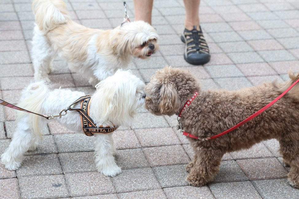 Why Franklin, Tennessee is the Most Pet-Friendly City in the South — and How Mars Petcare is Trying to Train Other Cities to Follow Its Lead