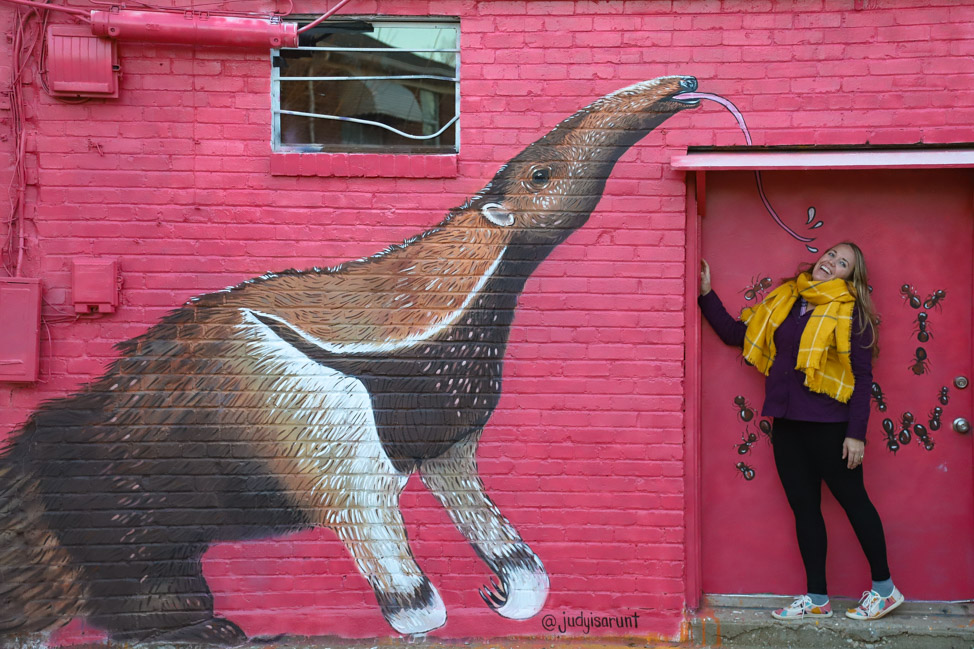 Anteater Mural in Oklahoma City's Plaza Walls