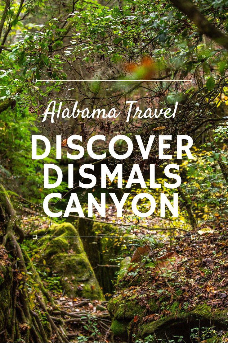 Dismals Canyon Alabama: The Best Hike in the Shoals