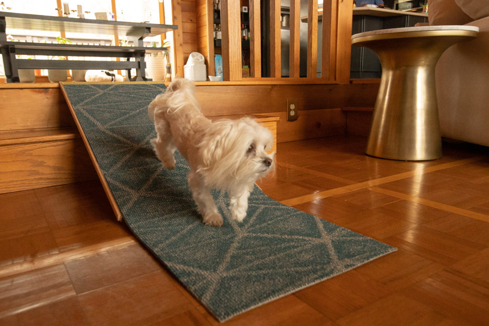 How to Build a Dog Ramp