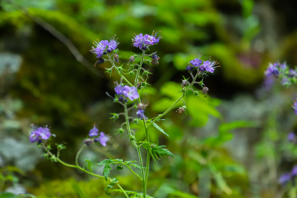 Wildflowers in the Smokies: Where to See Them at Tremont Institute