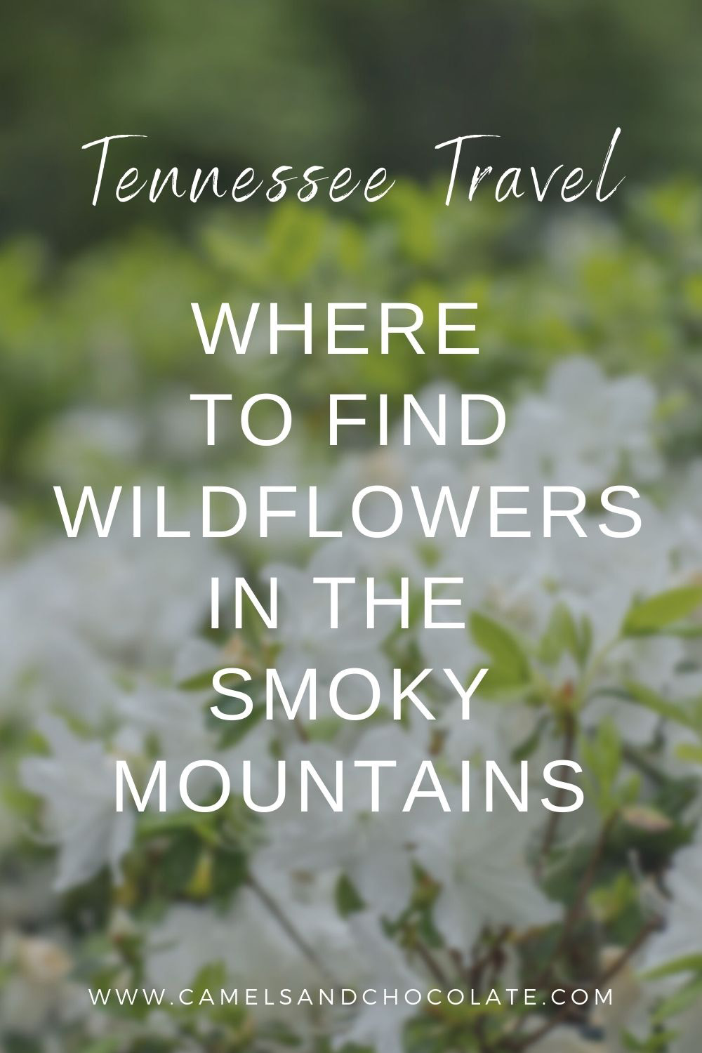 Where to See Wildflowers in the Smokies of Tennessee