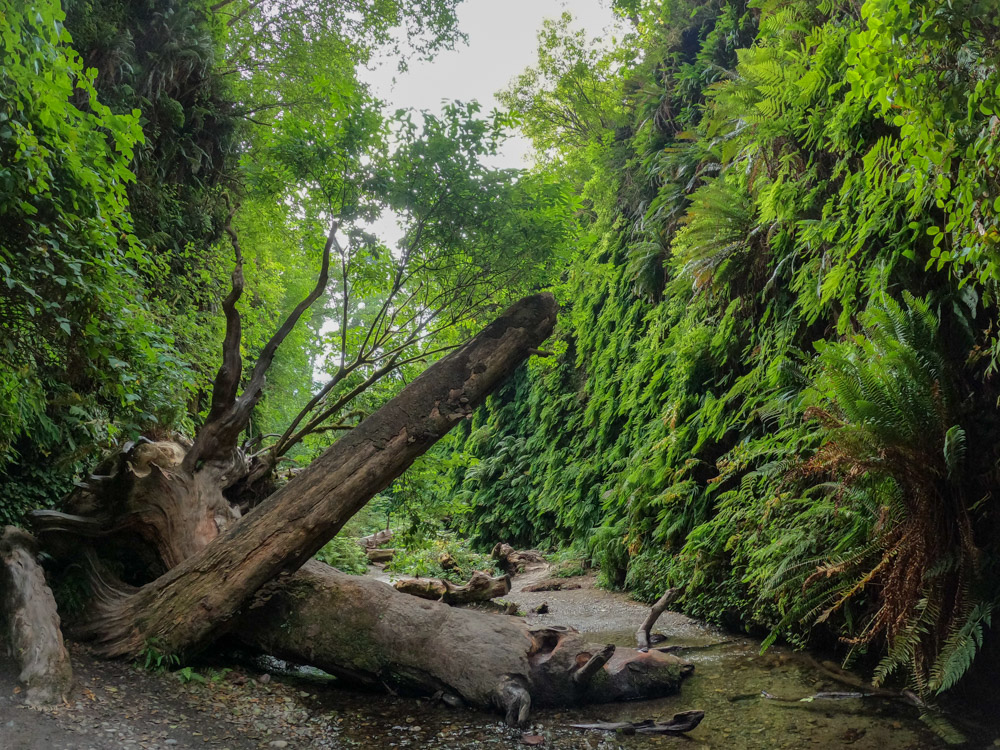 How to Visit Fern Canyon in California